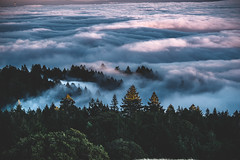 above the cloud, mt tamalpais (KTO_RAY) Tags: mt tamalpais mttamalpais bayarea nature landscape cloud trees woods peak sunset sony sonya7r