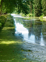 Rambouillet (thierrymasson94) Tags: rambouillet parc paysage france reflets