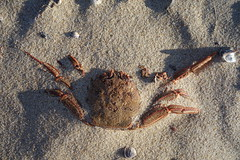 Saturday at Windang beach (Celeste33) Tags: crab sand beach