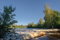 Flow (- Man from the North -) Tags: river water flow trees nature naturallight finland westcoast ostrobothnia bluesky sky tree waves samyang14mmf28 samyang nikond7000 nikon