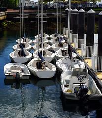 Docked Boats, Boston MA (Boston Runner) Tags: eastboston harborwalk massachusetts 2016 tour bostonhabornow boats docked set pier sailingcenter