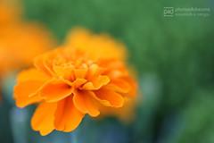 sunday walk 11.09.2016 -p4d- 065 (photos4dreams) Tags: sundaywalk11092016p4d sonntagsspaziergang spaziergang photos4dreams p4d photos4dreamz pflanzen blumen plants flowers
