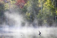 Fog over the pond (Teruhide Tomori) Tags: mist fog landscape nature japan nagano morning maimepond norikura water light       autumn  tree pond