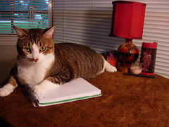 2009- Atari (teresamarkos) Tags: atari cat cats kitten kittens felines feline