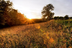 Ending of a Summerday (Leo's Wallpapers) Tags: austria canon1dsmarkiii forest hilmanger landscape meadow photography travel tree mariataferl niedersterreich sterreich niedersterreich sterreich