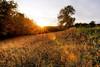 Ending of a Summerday (Leo's Wallpapers) Tags: austria canon1dsmarkiii forest hilmanger landscape meadow photography travel tree mariataferl niederãâ¶sterreich ãâsterreich niederðâ¶sterreich ðâsterreich