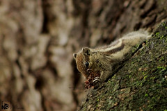 Squirrel.. (Jams Nabil) Tags: squirrel wild life canon photography wide world flickr explore