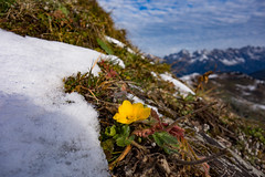 Klingspitz_Herbst (bernd.kranabetter) Tags: dientenamhochknig herbst schnee klingspitz kalt cold sonydscrx100
