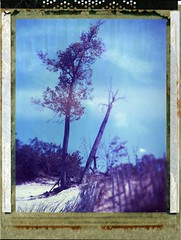 (er_code_blue) Tags: polaroidweek film 4x5 largeformat analog instant expired 59 polaroid crowngraphic graflex