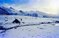 Trekking in Sonamarg - Kashmir - Himalaya - India (Lior. L) Tags: trekkinginsonamargkashmirhimalayaindia trekking sonamarg kashmir himalaya india travel snow nature hiking trek hike