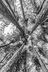 120 (Andrew J Horrocks) Tags: formby pinewoods freshfield liverpool trees