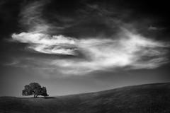 Bailey Tree (StefanB) Tags: california sky bw tree monochrome clouds san outdoor jose sanjose geotag treescape 2014 em5 baileyroad 45200mm