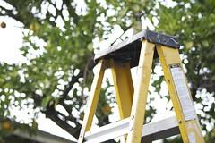 ladder (Davmi Pics) Tags: climb steps tools ladder