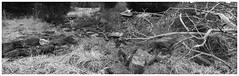 Ruins (daveelmore) Tags: bw panorama stone wall blackwhite ruins stitchedpanorama manassasnationalbattlefieldpark lumixleicadgsummilux25mm114