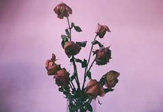 Viva la vida (Andreslozadah) Tags: life pink flowers red nature still