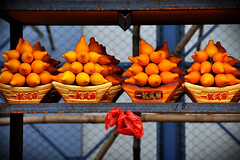 """Wishing Oranges"" at Lam Tsuen wishing trees , near the Tin Hau Temple in Fong Ma Po Village , Lam Tsuen , New Territories , Hong Kong (Ben Molloy Photography) Tags: new trees orange ma tin temple nikon village ben near year chinese hong kong cny hopes wishes po oranges messages molloy lam territories wishing fong hau tsuen benmolloy benmolloyphotography benmolloyhongkong"