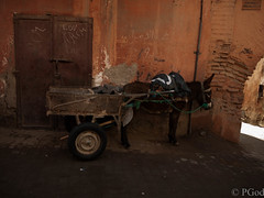 19022015-P1180123 (Philgo61) Tags: africa lumix vacances market panasonic morocco maroc marrakech souk xxx souks marché vacance afrique médina gf1