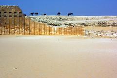 saqqara (enrico sprea) Tags: egypt sole cavalli egitto deserto sabbia tombe sakkara nilo egyptians archeologia cammelli anticoegitto egizi pyramidofdjoser piramidedisaqqara