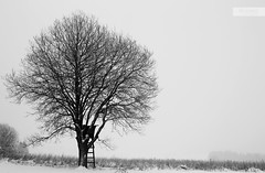 highly branched (desomnis) Tags: trees winter blackandwhite bw snow monochrome landscape 50mm austria landscapes blackwhite sterreich snowy landschaft obersterreich winterscape 6d upperaustria mhlviertel canon50mmf14 landscapephotography winterly canon6d desomnis