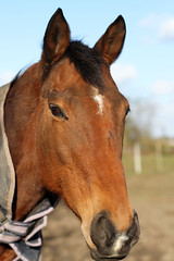 63/365: You can lead a horse to water... (judi may) Tags: horse 50mm hertfordshire day63 ickleford canon7d day63365 365the2015edition 3652015 4mar15