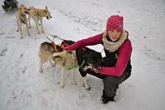 Arctic Arrow Kennel (hannahsmith66) Tags: dog dogs alaska arctic pony ponies arrow mushing kennel icelandic wasilla