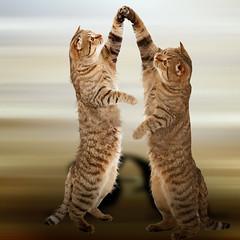 Dancers (jaci XIII) Tags: cat dance dancers gatos dana