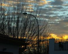 El perro de mi vecino  - EXPLORE,  January 20th, 2015 (Micheo) Tags: amanecer sunrise perro dog vecino neighbour granada spain explore best ok nubes clouds farola streetlamp casa home siluetas magia magic rejas carcel prison