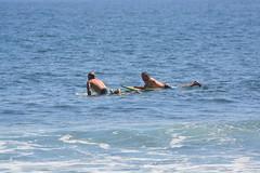 DSC_0050 (aliciadesign) Tags: surf whales bigisland honolii