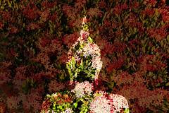 Flourishing Buddhism (inspiring!) Tags: photography asia niceshot photographer photos inspiring aasia musictomyeyes beautifulshot superphotographer royalgroup flickrhearts youvegottalent flickraward flickridol earthasia flickrestrellas thebestshot artofimages contactaward bestpeopleschoice wonderfulasia impeialimages fabulousplanetevo