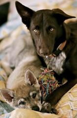 Ayra (Timoleon Vieta II) Tags: winter dog colour love wolf friendship czech diary slovakia comfort krumlov timoleon