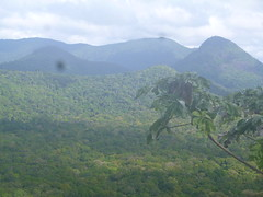 The expansive rainforest of Guyana
