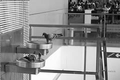 Airport Residents (pathikdebmallik) Tags: water airport dispenser pigeons lounge passengers railings kolkata calcutta stainless ccu