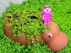 Cheshire Cat (Trev Grant) Tags: cheshirecat lego minifigure thedisneyseries hippo hippoland aliceinwonderland 2016 26thjuly2016