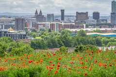 Wildflowers in the city (Bev Goodwin) Tags: flowers liverpool poppies cornflowers royalliverbuilding waterfront pier head skyline pierhead city cityscape northwest england clouds