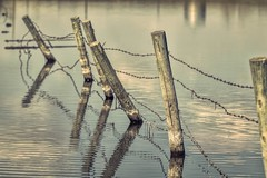 Hold the line (Tracey Rennie) Tags: reflection fence pond alberta barbedwire slough fencepost cochrane