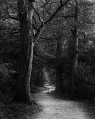 The long and winding (adrian.sadlier) Tags: woods woodland path curves winding dogs family companions journey metaphor beatles