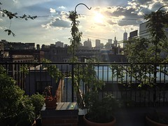 Rooftop with a view  #brooklyn #newyork