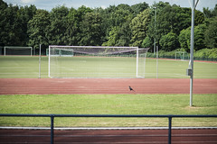 Auf dem Sportplatz (hb.s) Tags: sportplatz 85mm baum bume tree zaun fence zune tor goal colour bunt sportsground