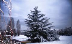 Paisaje invernal. (Ova.) Tags: nieve frio invierno snow