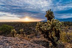 Saguaro National Park Sunset (andrewcmartin) Tags: arizona desert cactus nps100