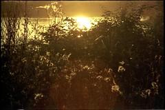Sunset over Lake Hrblach (brouillard23) Tags: coucher de soleil sunset posta del sol hrblach sonnenuntergang lac lake see contraluz flare rokkor 135mm tele srt 101 28 ferrania fg 200 fg200 plus schwarzach mnsterschwarzach solaris