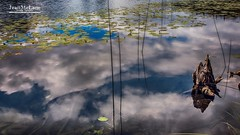 Sky on water. (Jean McLane) Tags: sky reflects reflections nuages nubes waterfront lake jura ilay nenufar