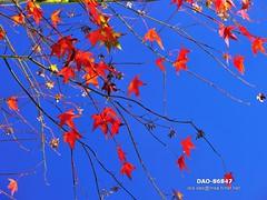 DAO-86847 (Chen Liang Dao  hyperphoto) Tags:   taiwan