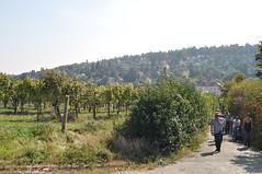 sDSC_0042 (L.Karnas) Tags: wien vienna wiede    viena vienne autumn austria sterreich herbst 2016 weinwandertag wein wander tag wanderung wine wandering neustift am walde