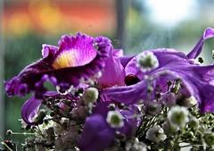 _DSC0046  Feliz Da de la Madre !! (Aprehendiz-Ana La) Tags: fotografa flickr analialarroude madre mam mama mader festejo luz amor flores flor bouquet orqudea argentina mujer mdq formas bouquets color violeta morado hijos