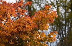 (careth@2012) Tags: fall autumn leaves scenery scene scenic view nature