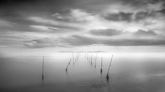 Reeds and clouds 2 (Mariano Belmar Torrecilla) Tags: blancoynegro bw spain murcia marmenor losurrutias