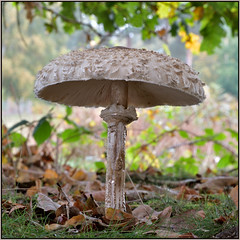 Autumn Fungi (image 1 of 3) (Full Moon Images) Tags: rspb sandy lodge thelodge wildlife nature reserve autumn fungi