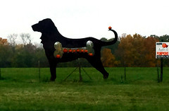 BIg Dog with Pumpkins (ParkerRiverKid) Tags: pumpkins bigdog metalsculpture ansh74 scavenger10