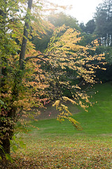 Autumn 2016-3 (Lynne 1212) Tags: buckland abbey autumn x100t